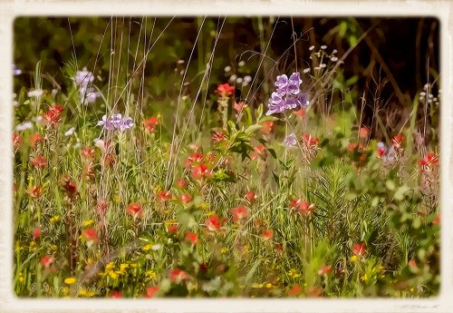 Painted Wildflowers